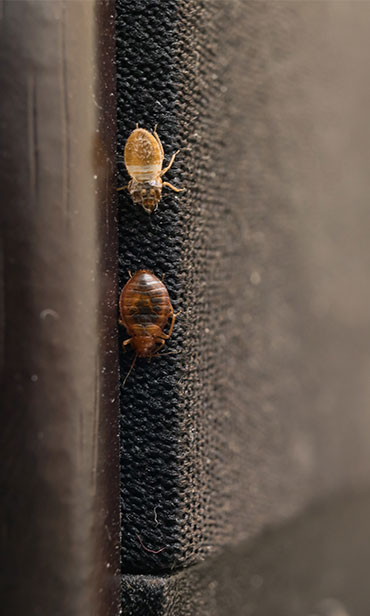 Bed Bug Treatments in homes South New Jersey & the Philadelphia-metro area.