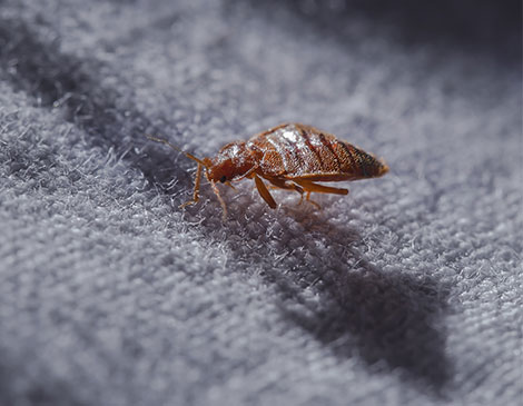 Reliable Safe Bed Bug Solutions For South New Jersey & the Philadelphia-metro area.