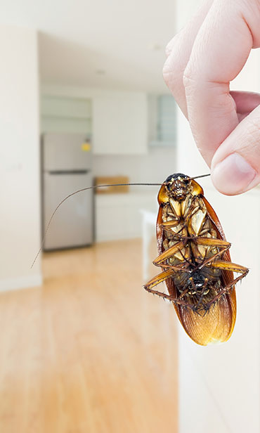 Reliable Home Pest Control Solutions For South New Jersey & the Philadelphia-metro area.