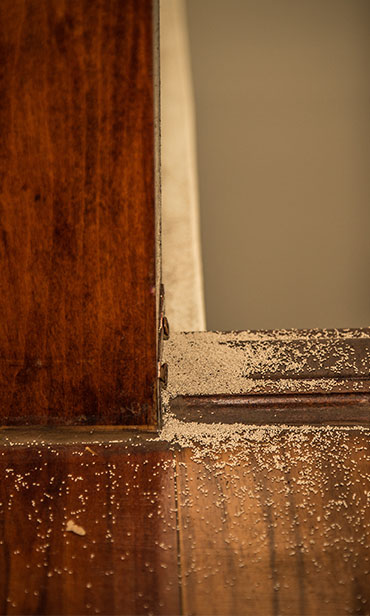 Termite damage in homes South New Jersey & the Philadelphia-metro area.