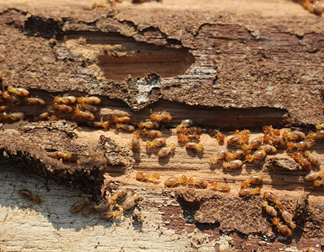 Reliable Termite Control Solutions For South New Jersey & the Philadelphia-metro area.